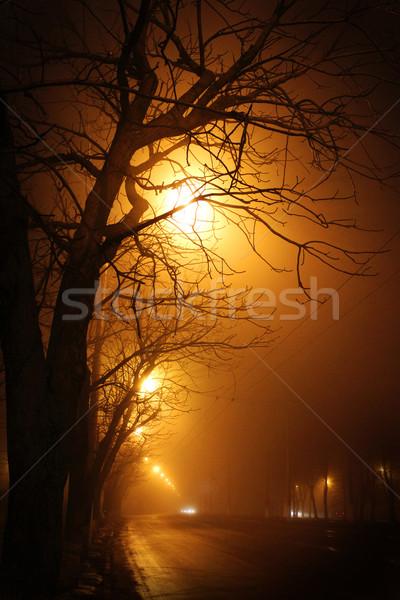 trees beside the road at night Stock photo © koca777