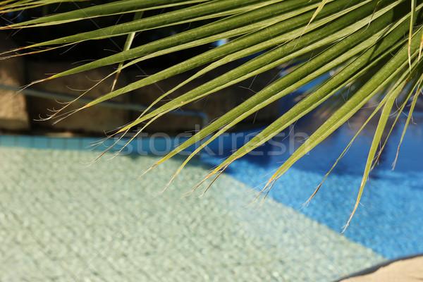 palm tree in the resort Stock photo © koca777