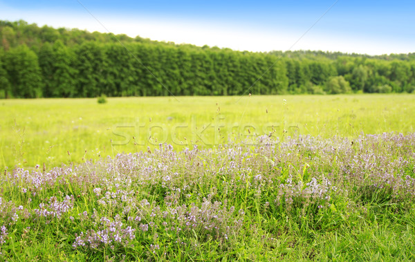 beautiful flowers forest and sky in nature Stock photo © koca777