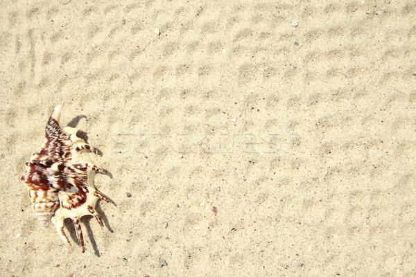 background l sand on the beach Stock photo © koca777