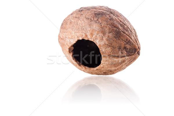 Concha buraco natureza fruto esquilo Foto stock © kokimk