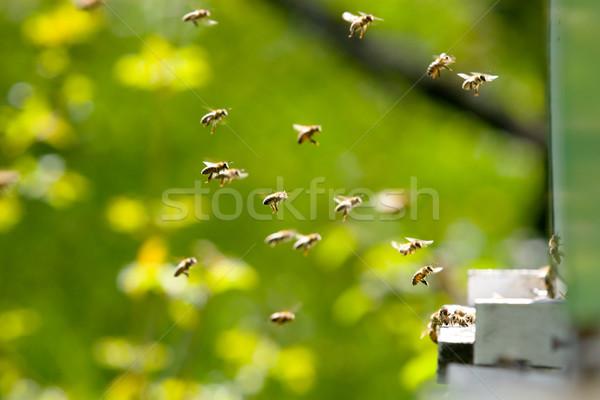 Abelhas trabalhando voador fora colméia família Foto stock © kokimk