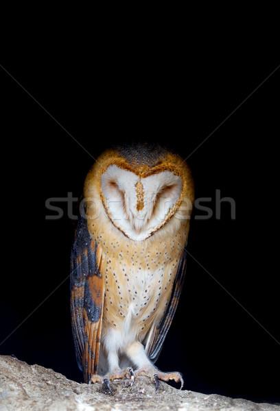 Ahır baykuş portre ayakta kaya yüz Stok fotoğraf © kokimk