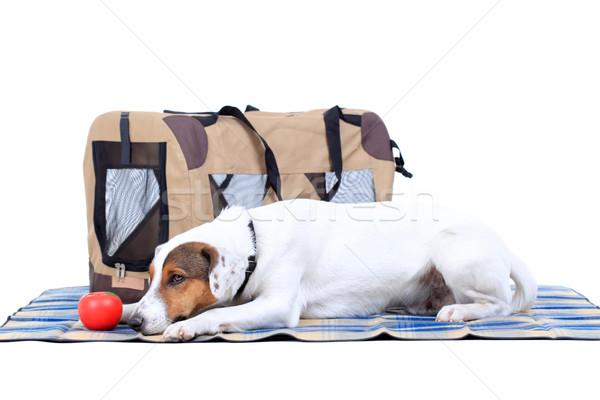 Terriyer çanta beyaz hayvan sepet Stok fotoğraf © kokimk