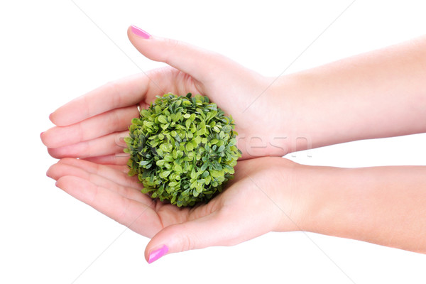 hands holding plant Stock photo © kokimk