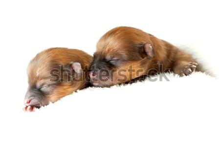 Yavru çift eski bebek saç turuncu Stok fotoğraf © kokimk