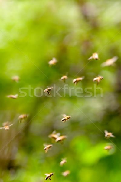 Arılar uçan soyut bir arı odak Stok fotoğraf © kokimk