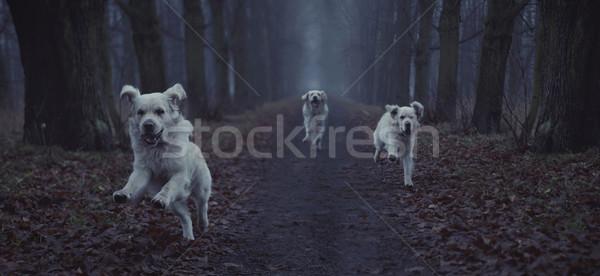 Fantasztikus kép fut kutya gyönyörű boldog Stock fotó © konradbak
