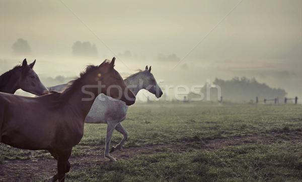 Great scene of running horses Stock photo © konradbak