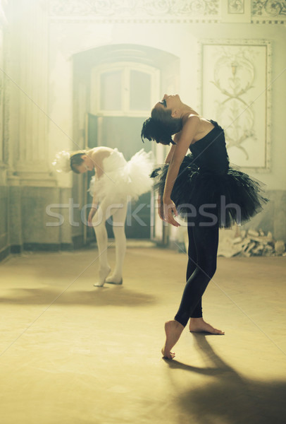 Duet of black&white ballet swans Stock photo © konradbak