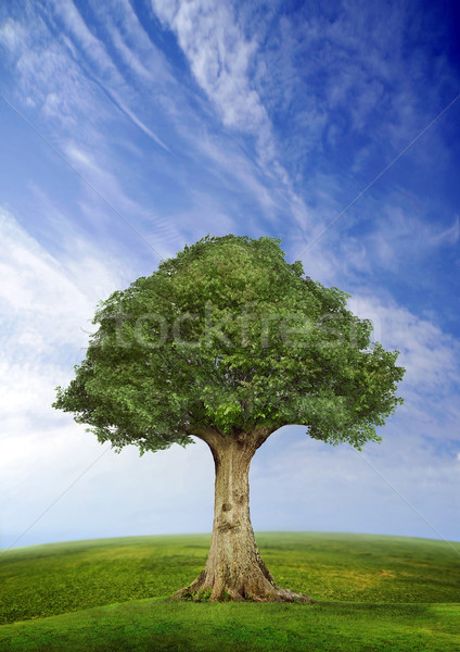 Tree standing alone in a field over blue sky, fish eye lens horizon Stock photo © konradbak