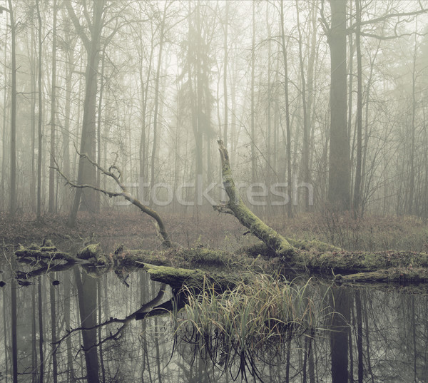 Broken tree plunged in the water Stock photo © konradbak
