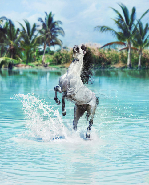 Majestic horse jumping in the pool Stock photo © konradbak