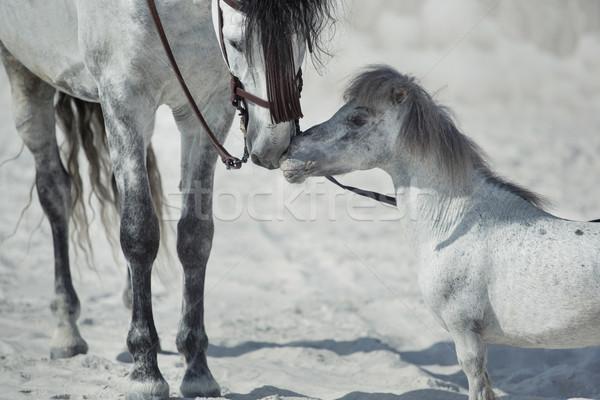 Fine scene of the two hugging horses Stock photo © konradbak