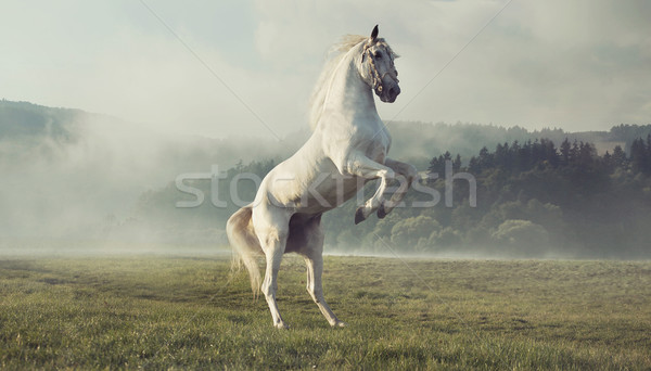 Strong white horse on the autumn meadow Stock photo © konradbak