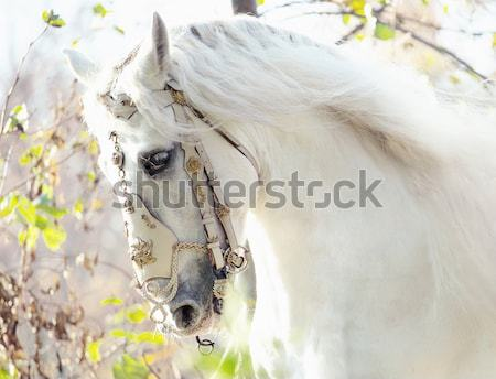 Stock photo: Blonde nymph with the white horse