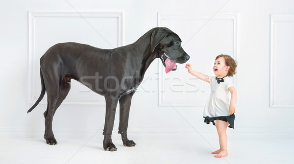 Stock photo: Cute little girl playing with a huge dog