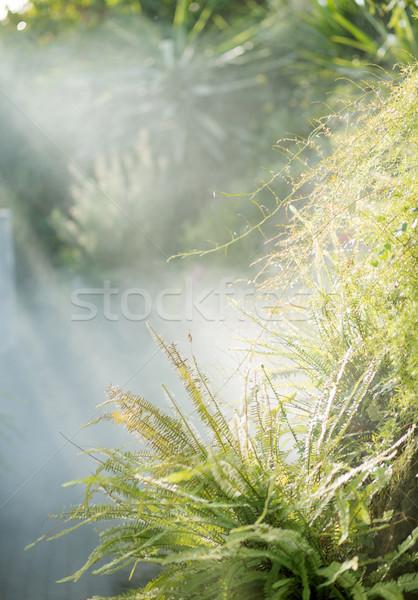 Taze yeşil eğreltiotu tropikal bahçe Stok fotoğraf © konradbak