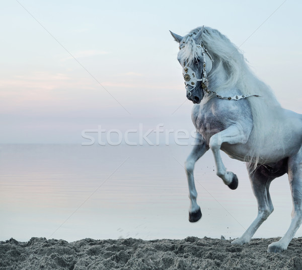 Majestic horse galloping on the beach Stock photo © konradbak
