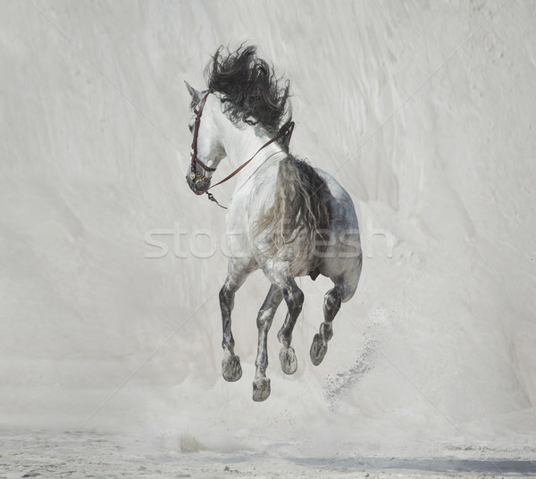 Photo presenting the galloping horse Stock photo © konradbak