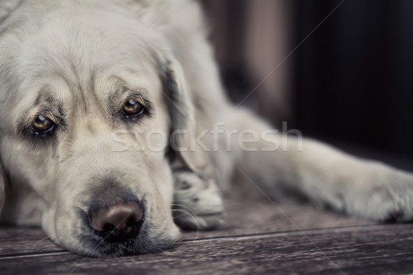 Stock photo: Sad dog waiting for master