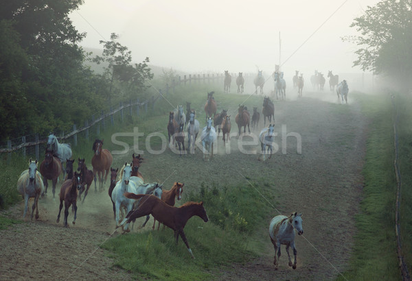 Stock photo: Bevy of horses running at the rular area