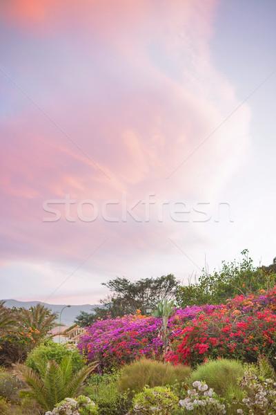 Piękna pachnący ogród wiosną kwiat Zdjęcia stock © konradbak