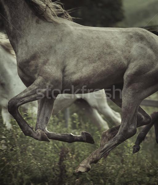 Picture of horse's body elements Stock photo © konradbak