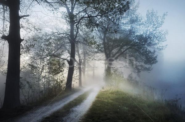 Lenyűgöző ködös tájkép égbolt fa fű Stock fotó © konradbak