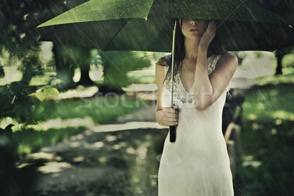 Summer rain Stock photo © konradbak