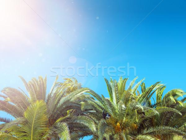 Tropical plam tree over the clear sky Stock photo © konradbak