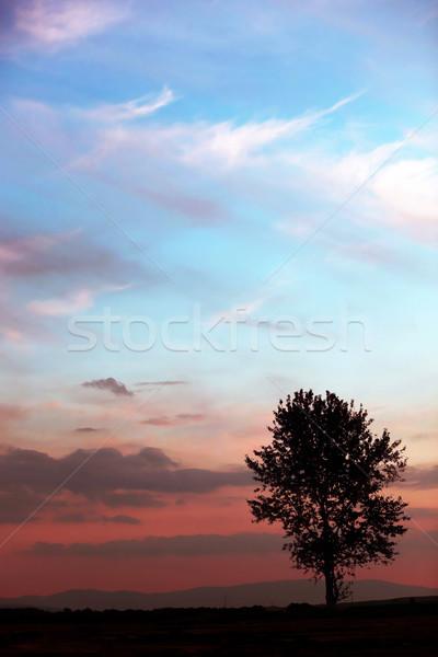 Mooie landschap eenzaam boom oude hemel Stockfoto © konradbak
