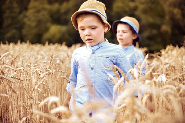 Two little brothers walking among cereal  Stock photo © konradbak