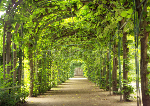 Beautiful tunnel made of trees Stock photo © konradbak