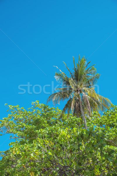 Green, blooming tropical forest - palm tree Stock photo © konradbak