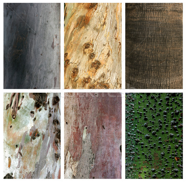 Photo collage of exotic wood trunks and textures Stock photo © konradbak