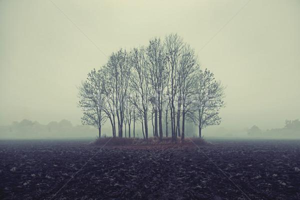 Photo of autumn trees Stock photo © konradbak