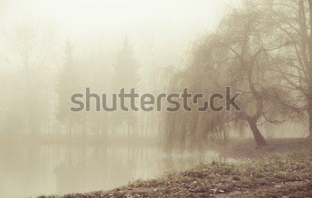 Foggy moring in peaceful place Stock photo © konradbak