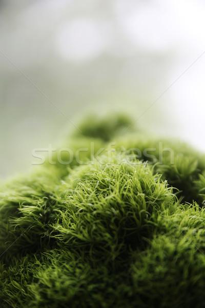érdekes példány természet vad virág erdő Stock fotó © konradbak