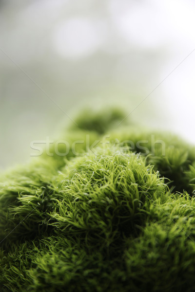 Interessante espécime natureza flor floresta Foto stock © konradbak