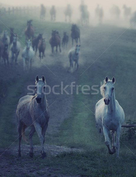 Wild horses running through the rular path Stock photo © konradbak