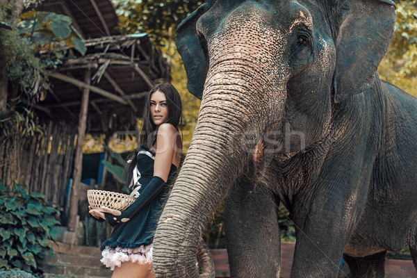 Brunette elephant trainer feeding her pet Stock photo © konradbak