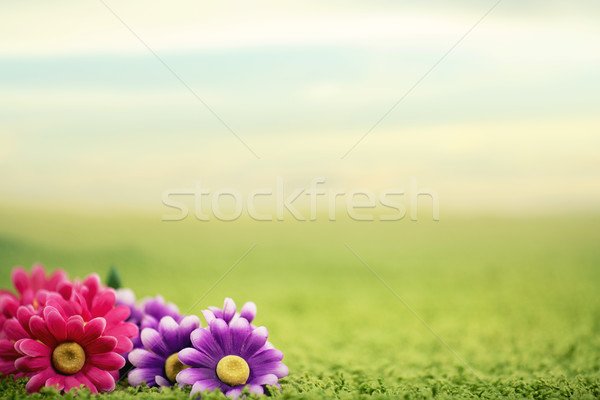 Cute flowers on lawn Stock photo © konradbak