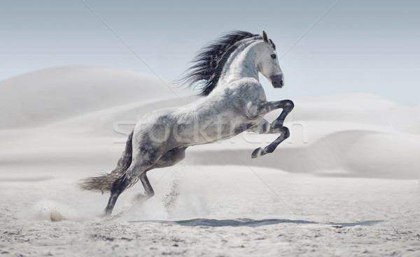 Picture presenting the galloping white horse Stock photo © konradbak