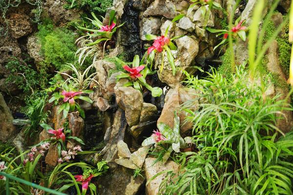 Mooie bloem groeiend tropische regenwoud plant Stockfoto © konradbak