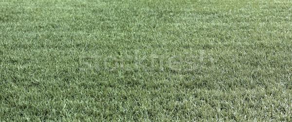 The dry green grass and dry grass summer fields straw Stock photo © konradbak