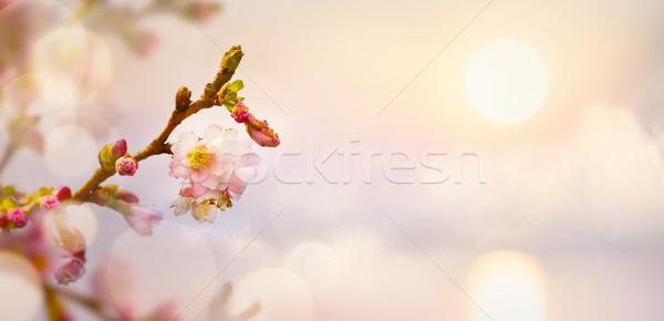 Tavaszi virág húsvét tájkép tavasz természet Stock fotó © Konstanttin