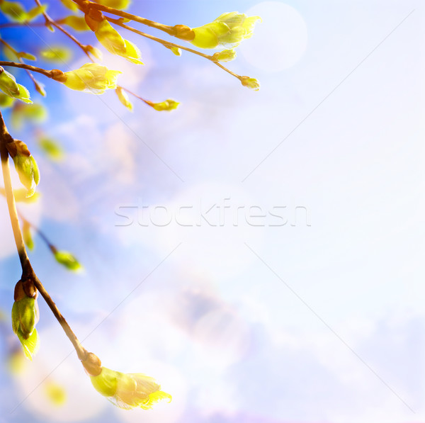 Spring tree buds and young leaves; spring background Stock photo © Konstanttin