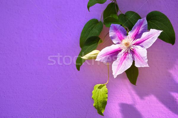 beatiful summer flowers background frame Stock photo © Konstanttin