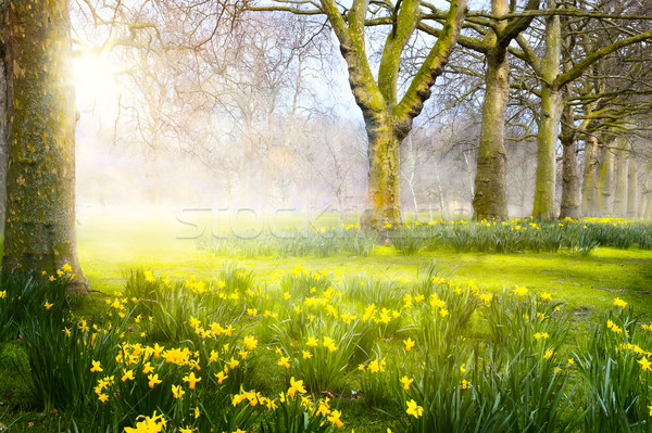 Art spring flowers in the park; Easter landscape Stock photo © Konstanttin